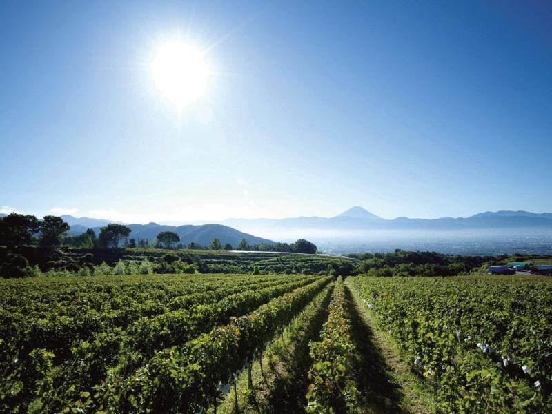 |和食とワイン|土地とぶどうの語、和食とワインの方程式。