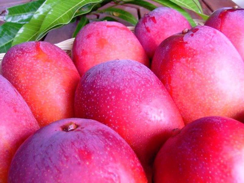 絶品!有機農法の完熟マンゴー、FOOD PORT.で絶賛販売中!
