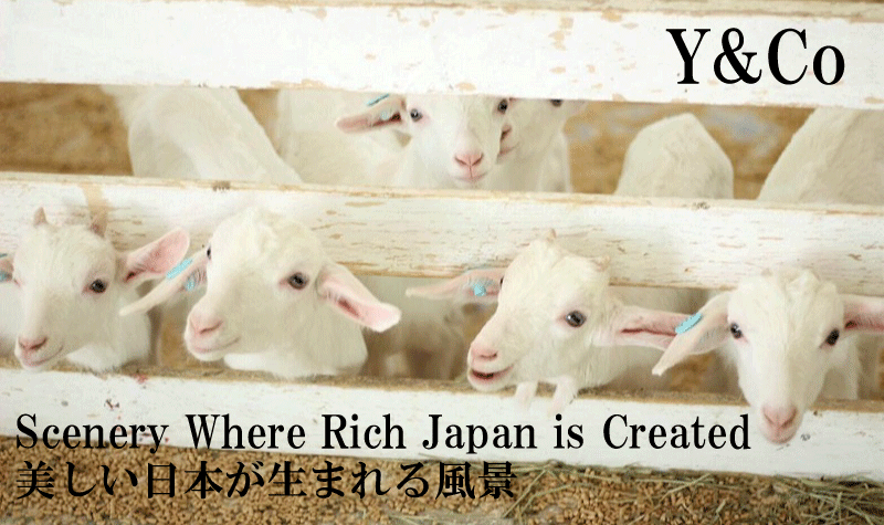 Scenery Where Rich Japan is Created:Y&Co|美しい日本が生まれる風景:Y&Co
